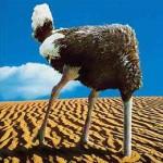 ostrich_head_sand2